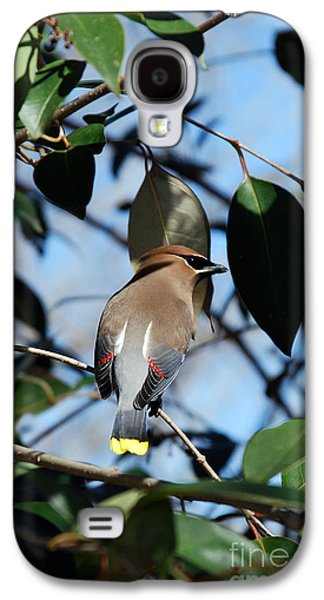 Photos Of Birds Galaxy S4 Cases - Cedar Portrait Galaxy S4 Case by Skip Willits