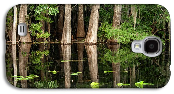 Cedar Trees In Suwannee River, Florida Galaxy S4 Case by Sheila Haddad