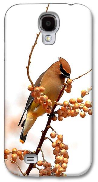 Cedar Wax Wing Galaxy S4 Case by Floyd Tillery