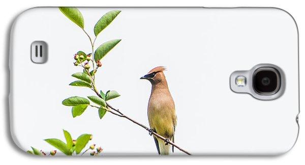 Cedar Waxwing Galaxy S4 Case by Kathy Schreiber-Castrataro