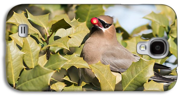 Photographs With Red. Galaxy S4 Cases - Cedar Waxwing with Berry Galaxy S4 Case by Terry DeLuco