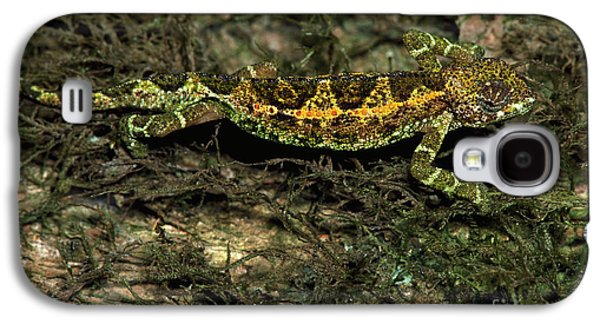 Chameleon Galaxy S4 Cases - Chameleon On A Lichen Covered Tree Galaxy S4 Case by Gregory G. Dimijian