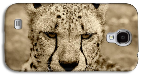 Leopard Pyrography Galaxy S4 Cases - Cheetah Galaxy S4 Case by GP Images