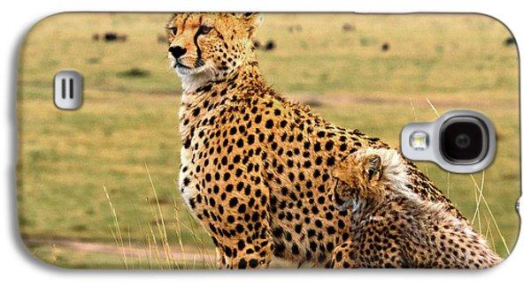 Cheetahs Galaxy S4 Case by Babak Tafreshi