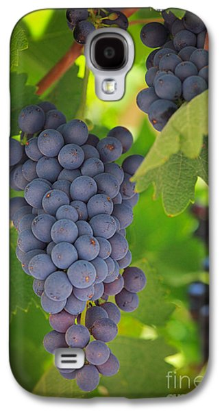 Chelan Blue Grapes Galaxy S4 Case by Inge Johnsson