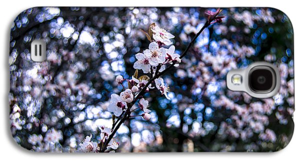 Cherry Blossoms Pyrography Galaxy S4 Cases - Cherry Blossom Galaxy S4 Case by Dr Mador