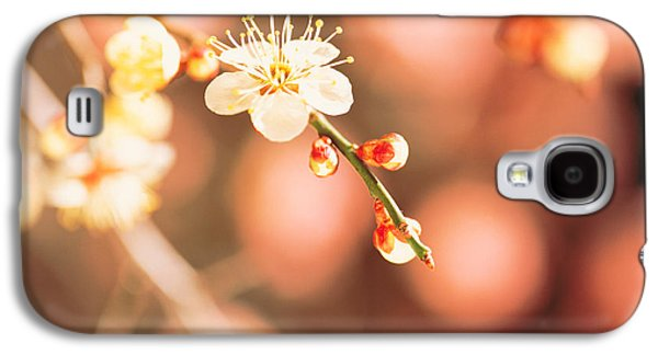 Close Focus Nature Scene Galaxy S4 Cases - Cherry Blossom In Selective Focus Galaxy S4 Case by Panoramic Images