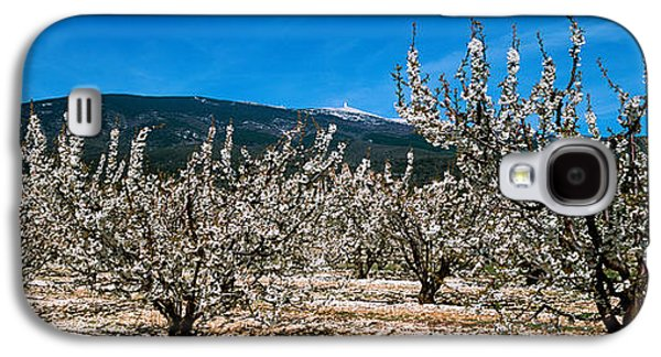 Cherry Blossoms Galaxy S4 Cases - Cherry Blossom, Mont Ventoux Galaxy S4 Case by Panoramic Images