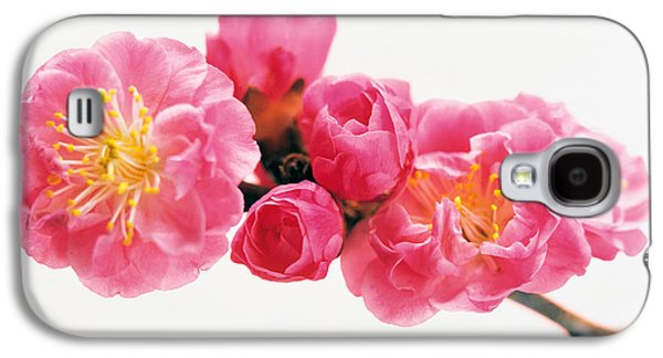 Studio Photography Galaxy S4 Cases - Cherry Blossom Galaxy S4 Case by Panoramic Images