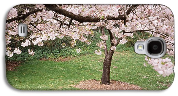 Cherry Blossoms Galaxy S4 Cases - Cherry Blossom Tree In A Park, Golden Galaxy S4 Case by Panoramic Images