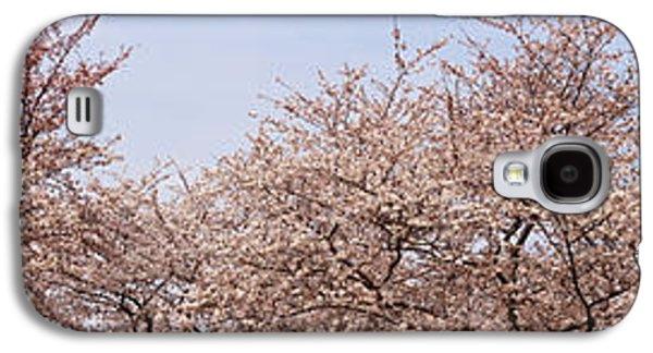 Cherry Blossoms Galaxy S4 Cases - Cherry Blossom Trees And Willow Tree Galaxy S4 Case by Panoramic Images