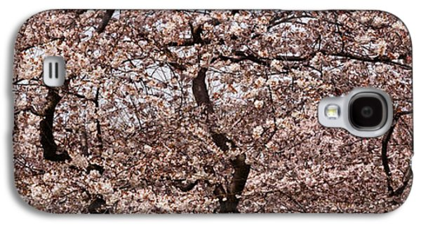 Cherry Blossom Trees In Potomac Park Galaxy S4 Case by Panoramic Images