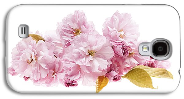 Cherry Blossoms Photographs Galaxy S4 Cases - Cherry blossoms arrangement Galaxy S4 Case by Elena Elisseeva