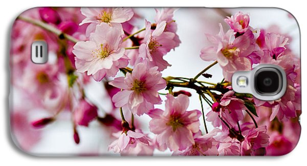 Cherry Blossoms Pyrography Galaxy S4 Cases - Cherry Blossoms Galaxy S4 Case by Ilze Lucero