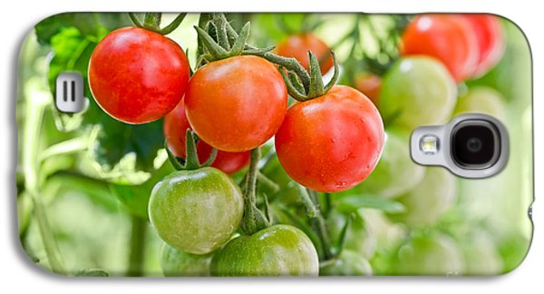 Cherry Tomatoes Galaxy S4 Case by Delphimages Photo Creations