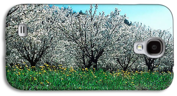 Cherry Blossoms Galaxy S4 Cases - Cherry Trees In A Field Galaxy S4 Case by Panoramic Images