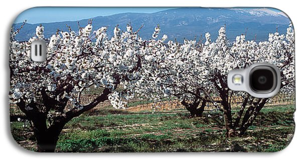 Cherry Blossoms Galaxy S4 Cases - Cherry Trees In A Field With Mont Galaxy S4 Case by Panoramic Images