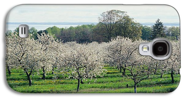 Cherry Blossoms Galaxy S4 Cases - Cherry Trees In An Orchard, Mission Galaxy S4 Case by Panoramic Images