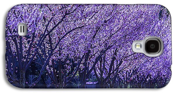 Cherry Tree Galaxy S4 Cases - Cherry Trees In Bloom Galaxy S4 Case by Garry Gay