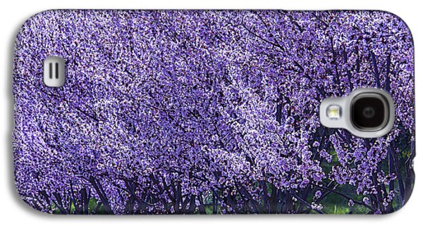 Cherry Tree Galaxy S4 Cases - Cherrys In Bloom Galaxy S4 Case by Garry Gay