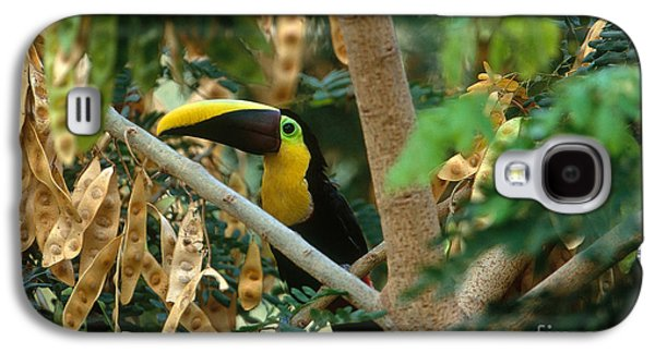 Chestnut-mandibled Toucan Galaxy S4 Case by Art Wolfe