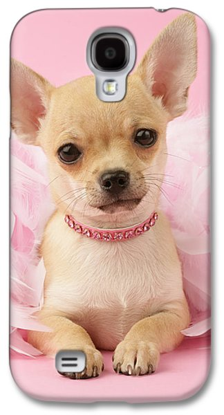 Puppies Galaxy S4 Cases - Chihuahua With Feather Boa Galaxy S4 Case by Greg Cuddiford