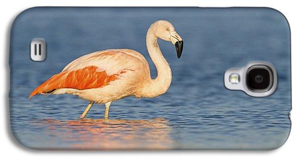 Chilean Flamingo Galaxy S4 Case by Ronald Kamphius