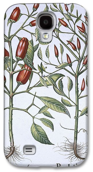 Flora Drawings Galaxy S4 Cases - Chilli Pepper Plants Galaxy S4 Case by German School