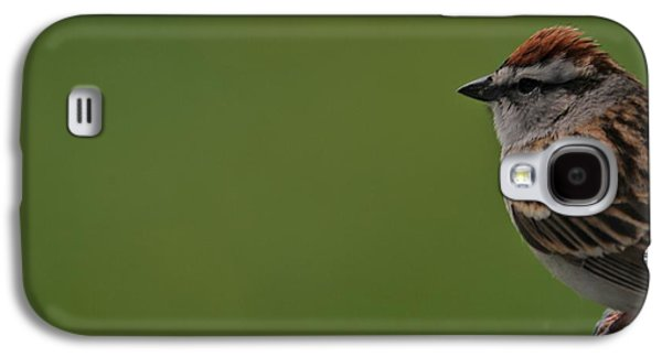 Sparrow Galaxy S4 Cases - Chirping Sparrow On Green Galaxy S4 Case by Dan Sproul