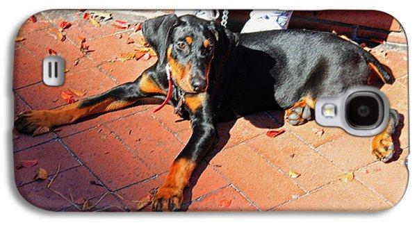 Canine Greeting Cards Digital Galaxy S4 Cases - Chloe Galaxy S4 Case by Suzanne Gaff