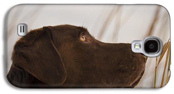 Chocolate Labrador Retriever Galaxy S4 Cases - Chocolate Lab Watching the sky Galaxy S4 Case by Jean Noren