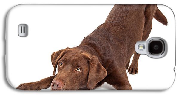 Guard Dog Galaxy S4 Cases - Chocolate Labrador Dog Bowing and Looking Up Galaxy S4 Case by Susan  Schmitz