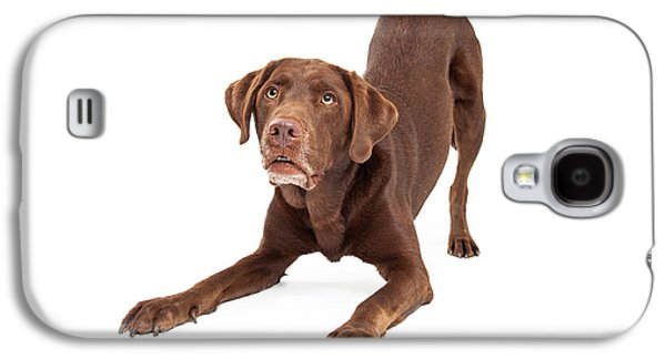 Guard Dog Galaxy S4 Cases - Chocolate Labrador Retriever Dog In Downdog Postion Galaxy S4 Case by Susan  Schmitz