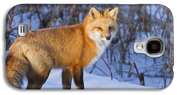 Fauna Photographs Galaxy S4 Cases - Christmas Fox Galaxy S4 Case by Mircea Costina Photography