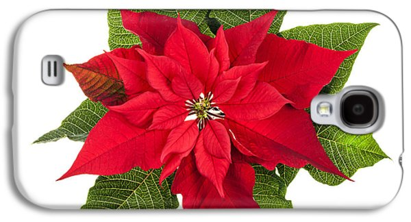 Cutouts Galaxy S4 Cases - Christmas poinsettia  Galaxy S4 Case by Elena Elisseeva