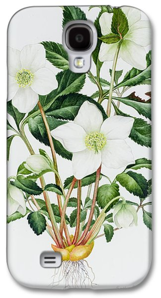 Spring Bulbs Paintings Galaxy S4 Cases - Christmas Rose Galaxy S4 Case by Sally Crosthwaite