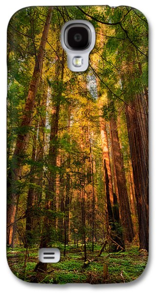 Paint Photograph Galaxy S4 Cases - Circle of Light - California Redwoods Galaxy S4 Case by Dan Carmichael