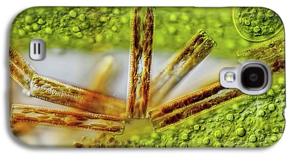 Cladophora Filaments Galaxy S4 Case by Gerd Guenther