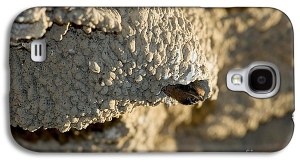 Hirundo Galaxy S4 Cases - Cliff Swallow About To Fledge Galaxy S4 Case by Anthony Mercieca