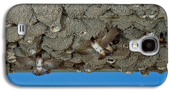 Hirundo Galaxy S4 Cases - Cliff Swallows At Nests Galaxy S4 Case by Anthony Mercieca