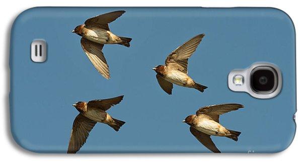 Hirundo Galaxy S4 Cases - Cliff Swallows Flying Galaxy S4 Case by Anthony Mercieca