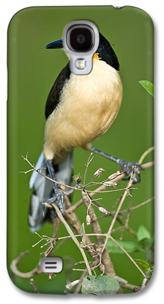 Wetlands Galaxy S4 Cases - Close-up Of A Black-capped Donacobius Galaxy S4 Case by Panoramic Images