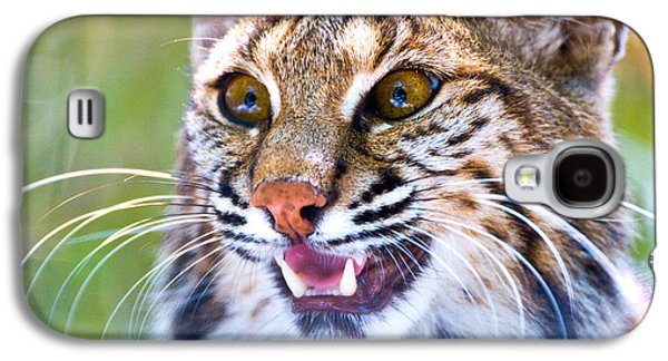 Bobcats Photographs Galaxy S4 Cases - Close-up Of A Bobcat Lynx Rufus Galaxy S4 Case by Panoramic Images