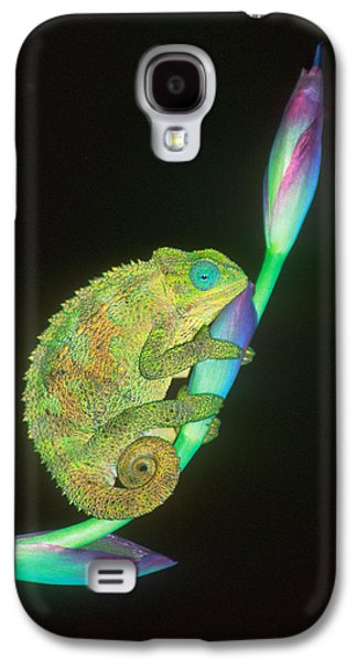 Chameleon Galaxy S4 Cases - Close-up Of A Chameleon Sitting Galaxy S4 Case by Panoramic Images