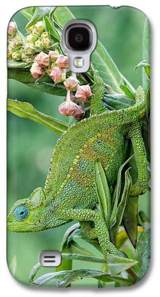 Chameleon Galaxy S4 Cases - Close-up Of A Dwarf Chameleon Brookesia Galaxy S4 Case by Panoramic Images