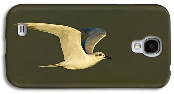 Tern Galaxy S4 Cases - Close-up Of A Gull-billed Tern Galaxy S4 Case by Panoramic Images
