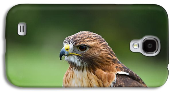 Red Tail Hawk Galaxy S4 Cases - Close-up Of A Red-tailed Hawk Buteo Galaxy S4 Case by Panoramic Images
