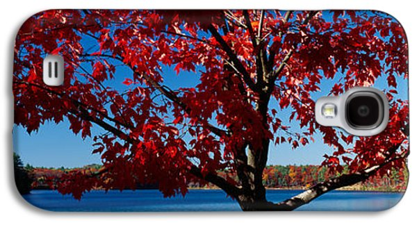 Concord Galaxy S4 Cases - Close-up Of A Tree, Walden Pond Galaxy S4 Case by Panoramic Images