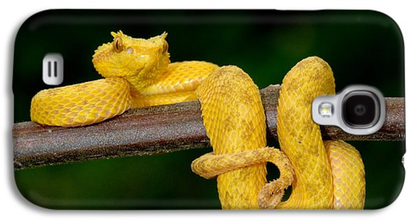 Close-up Of An Eyelash Viper Galaxy S4 Case by Panoramic Images