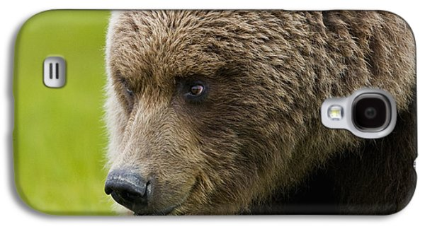 Harts Galaxy S4 Cases - Close Up Of Brown Bear In Sedge Grasses Galaxy S4 Case by Cathy Hart